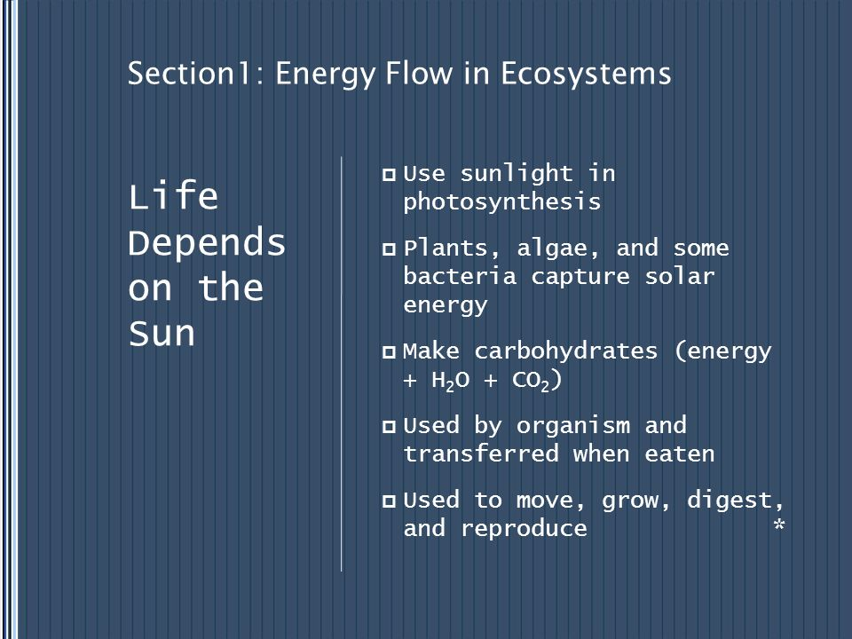 Section1: Energy Flow in Ecosystems