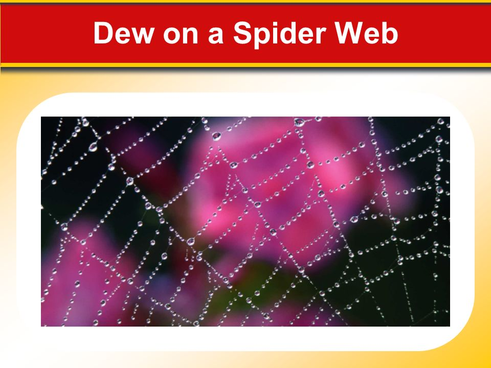 Dew on a Spider Web Makes no sense without caption in book
