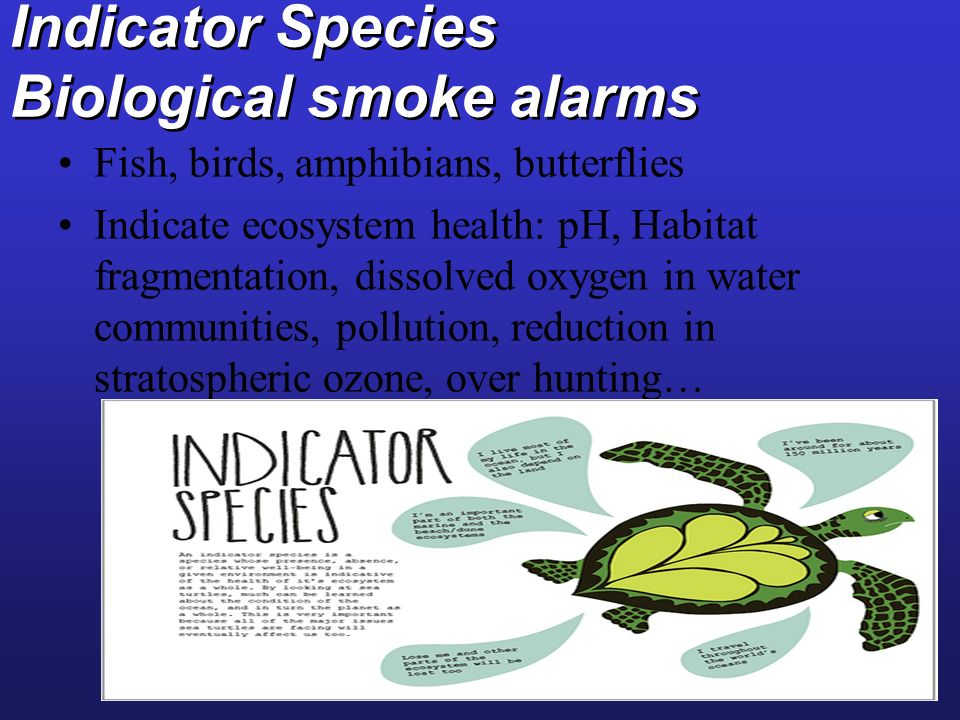 Indicator Species Biological smoke alarms