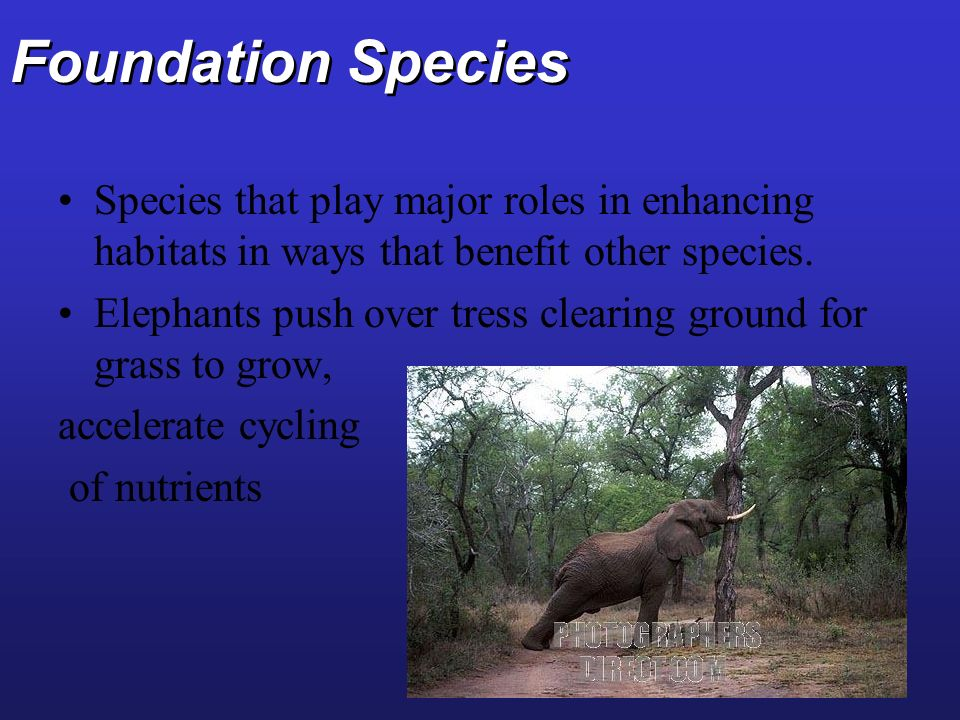 Foundation Species Species that play major roles in enhancing habitats in ways that benefit other species.