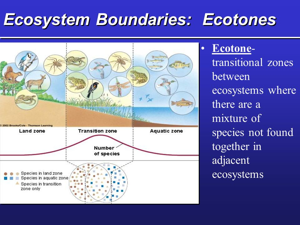 Ecosystem Boundaries: Ecotones