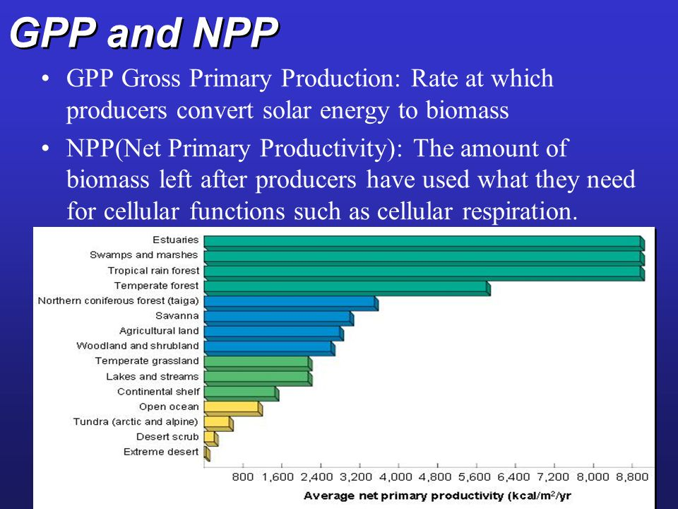 GPP and NPP GPP Gross Primary Production: Rate at which producers convert solar energy to biomass.