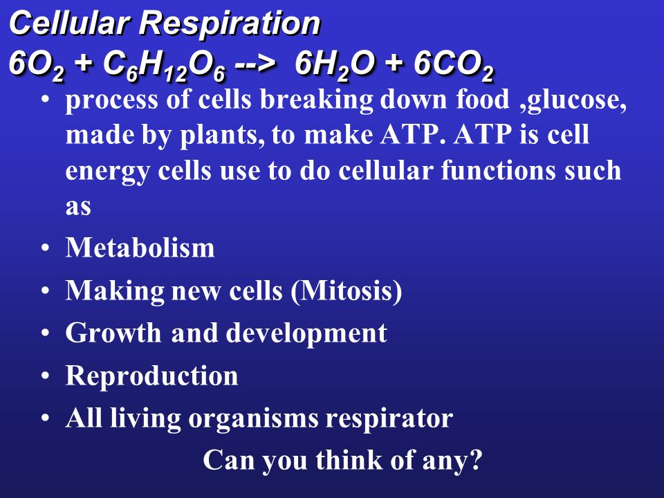 Cellular Respiration 6O2 + C6H12O6 --> 6H2O + 6CO2