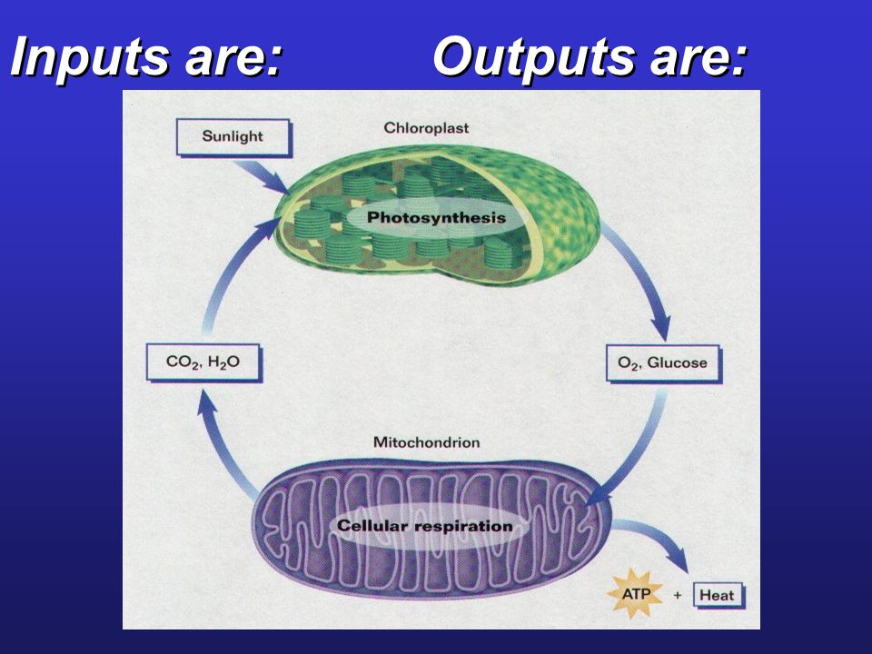 Inputs are: Outputs are: