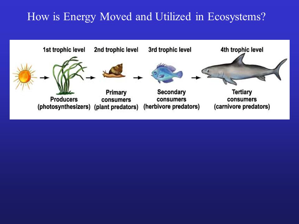 How is Energy Moved and Utilized in Ecosystems