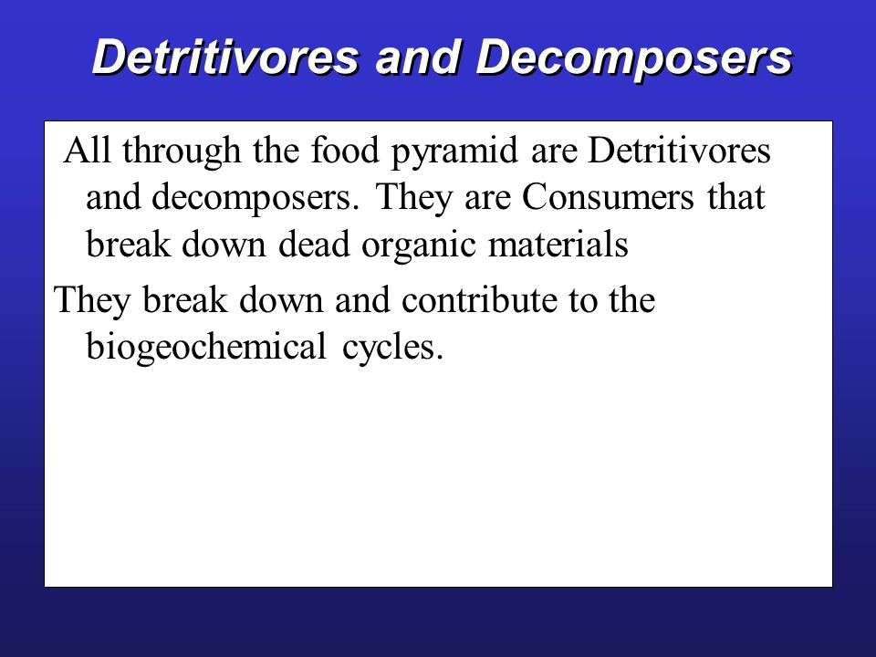 Detritivores and Decomposers