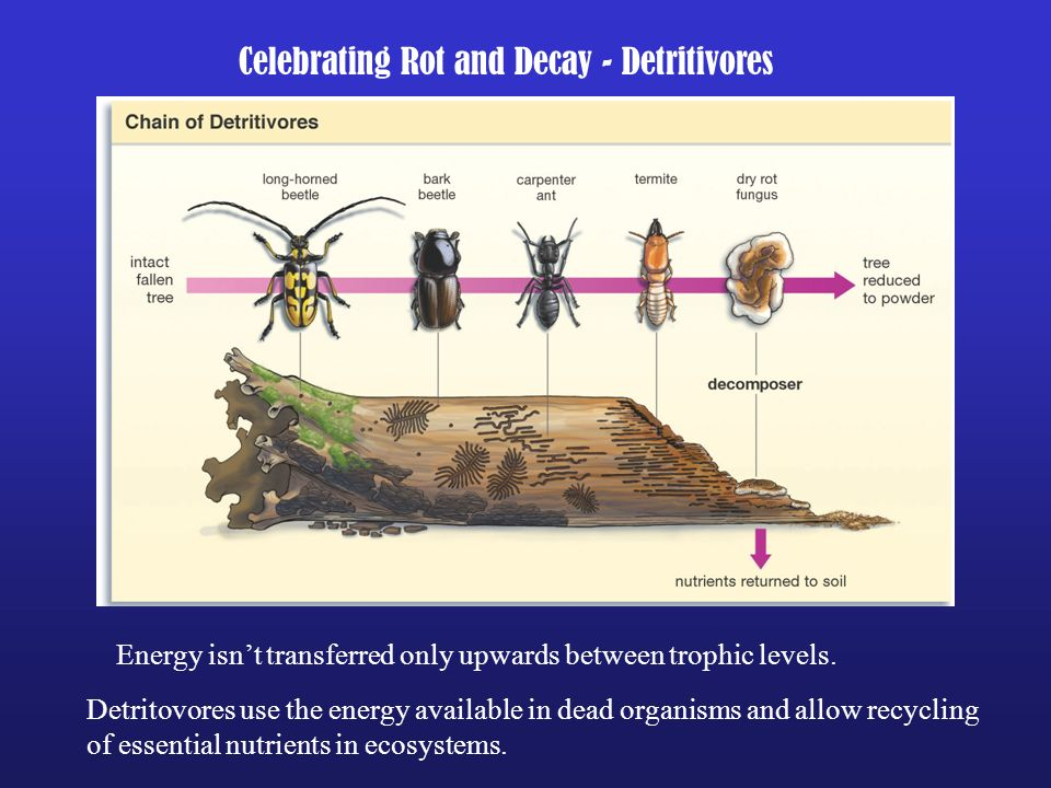 Celebrating Rot and Decay - Detritivores