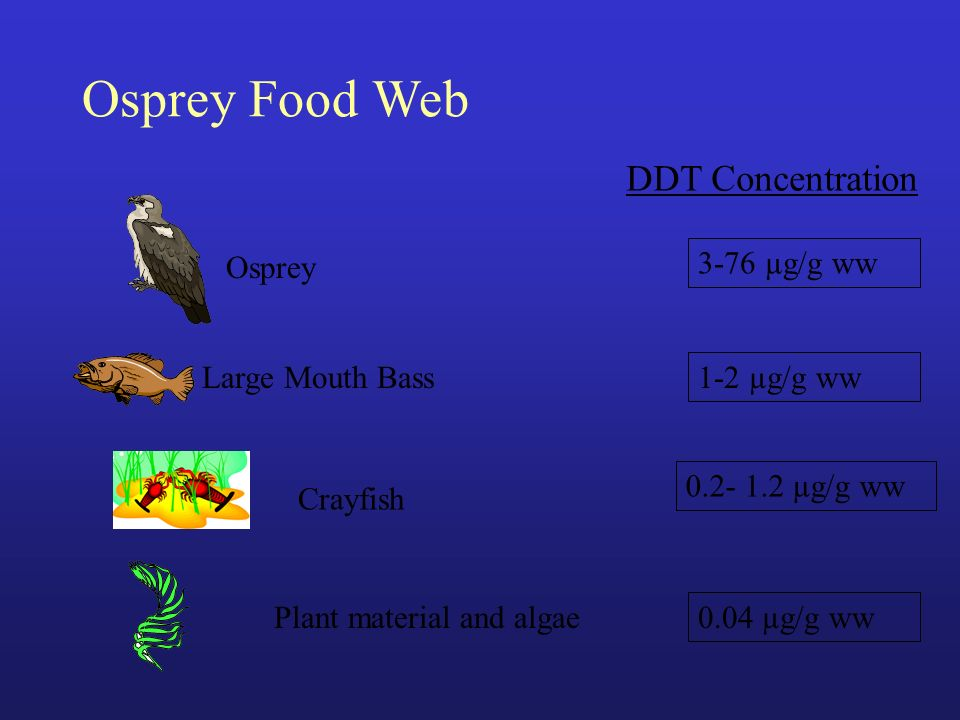 Osprey Food Web DDT Concentration Osprey 3-76 µg/g ww Large Mouth Bass