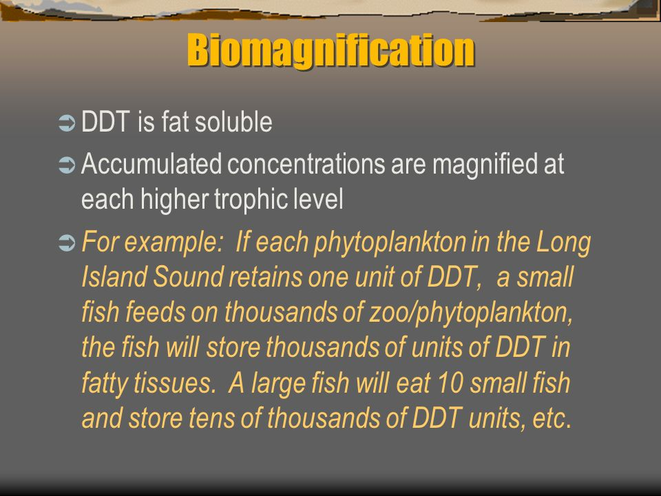 Biomagnification DDT is fat soluble