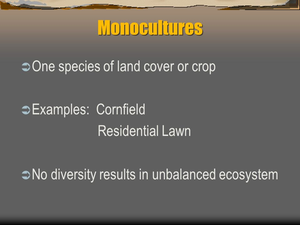 Monocultures One species of land cover or crop Examples: Cornfield