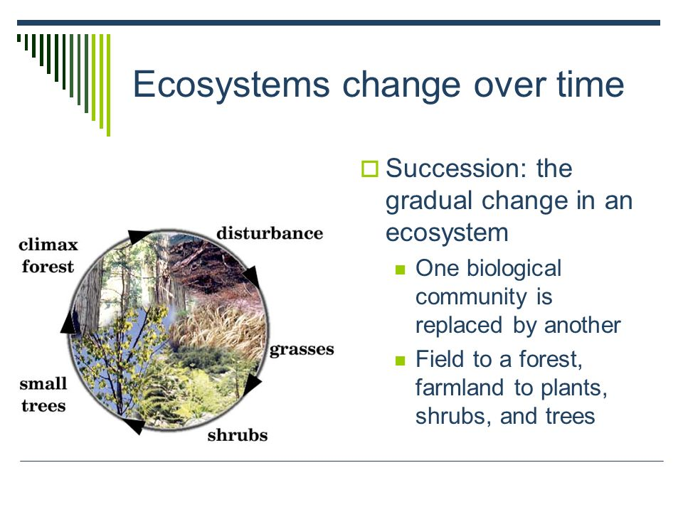 Ecosystems change over time