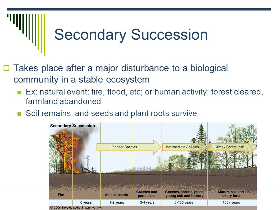 Secondary Succession Takes place after a major disturbance to a biological community in a stable ecosystem.