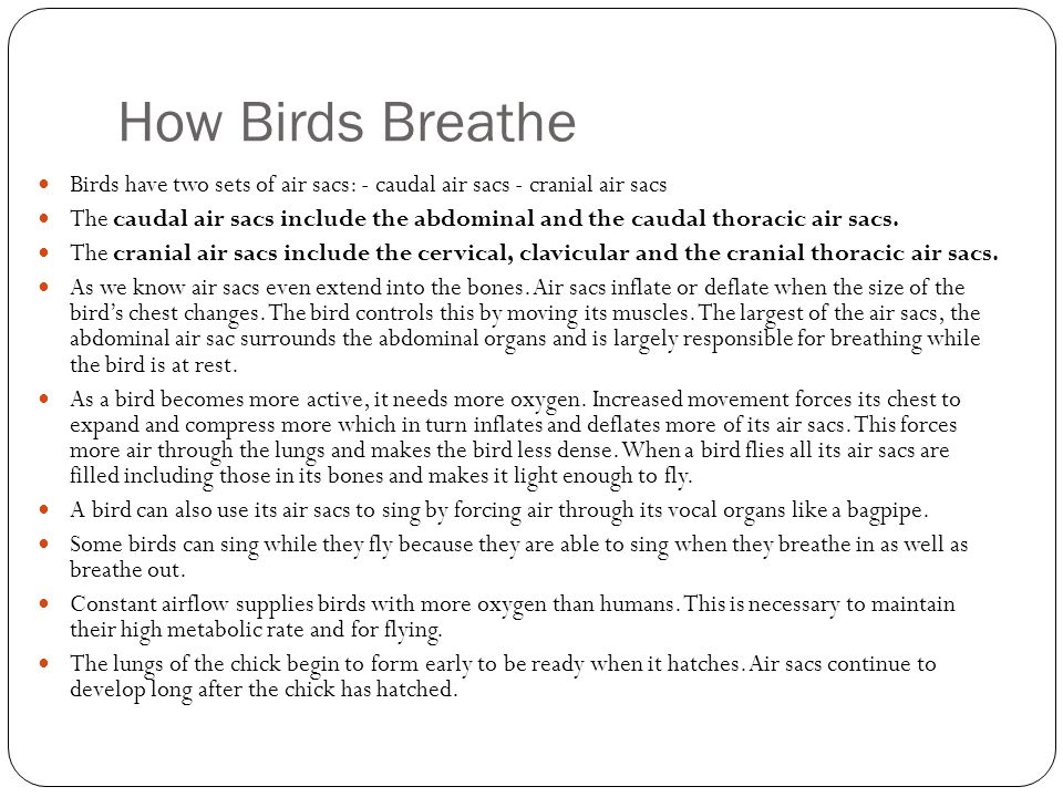 How Birds Breathe Birds have two sets of air sacs: - caudal air sacs - cranial air sacs.