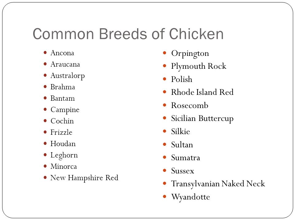 Common Breeds of Chicken