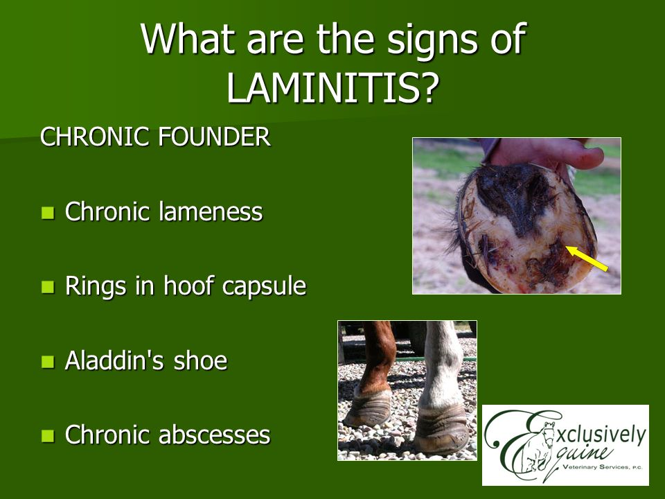 What are the signs of LAMINITIS