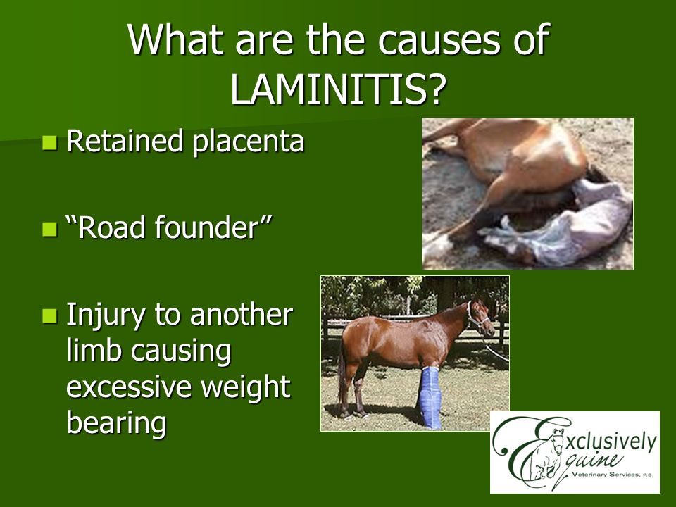 What are the causes of LAMINITIS