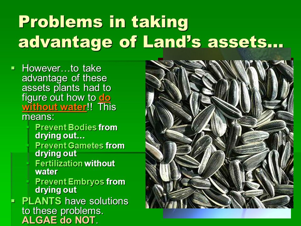 Problems in taking advantage of Land's assets…