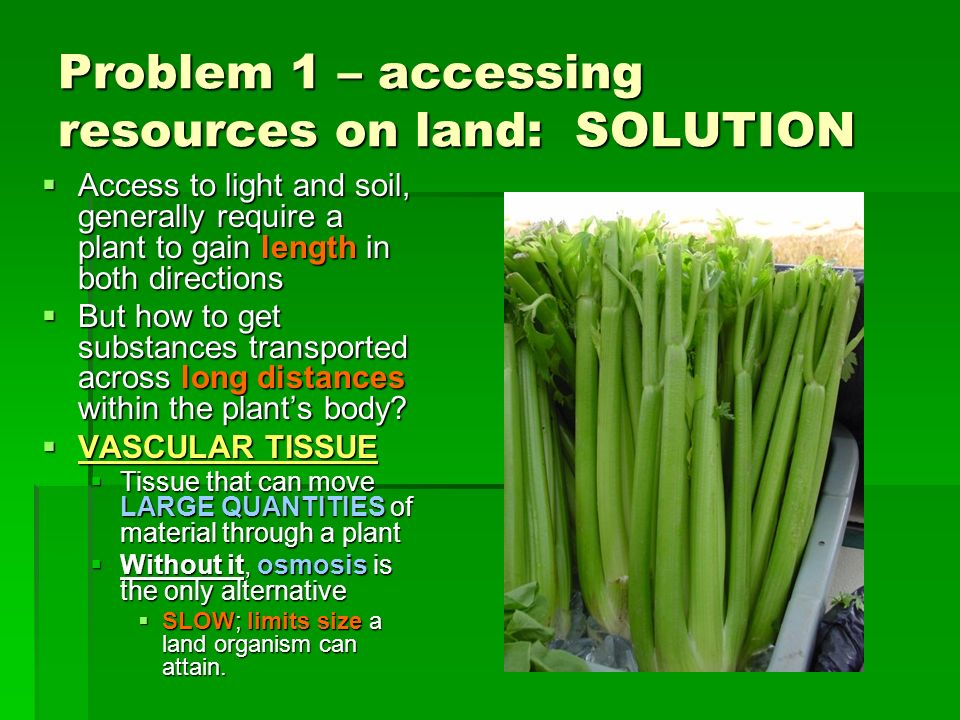 Problem 1 – accessing resources on land: SOLUTION