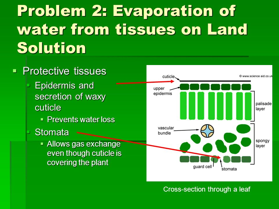Problem 2: Evaporation of water from tissues on Land Solution