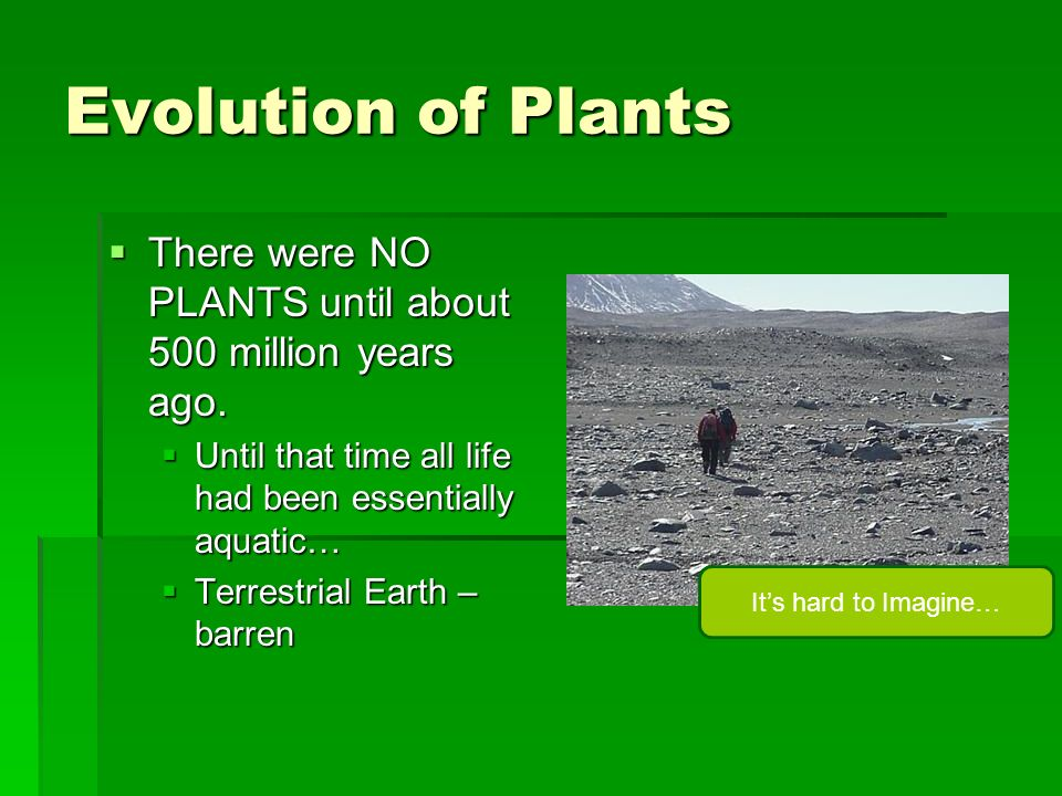 Evolution of Plants There were NO PLANTS until about 500 million years ago. Until that time all life had been essentially aquatic…