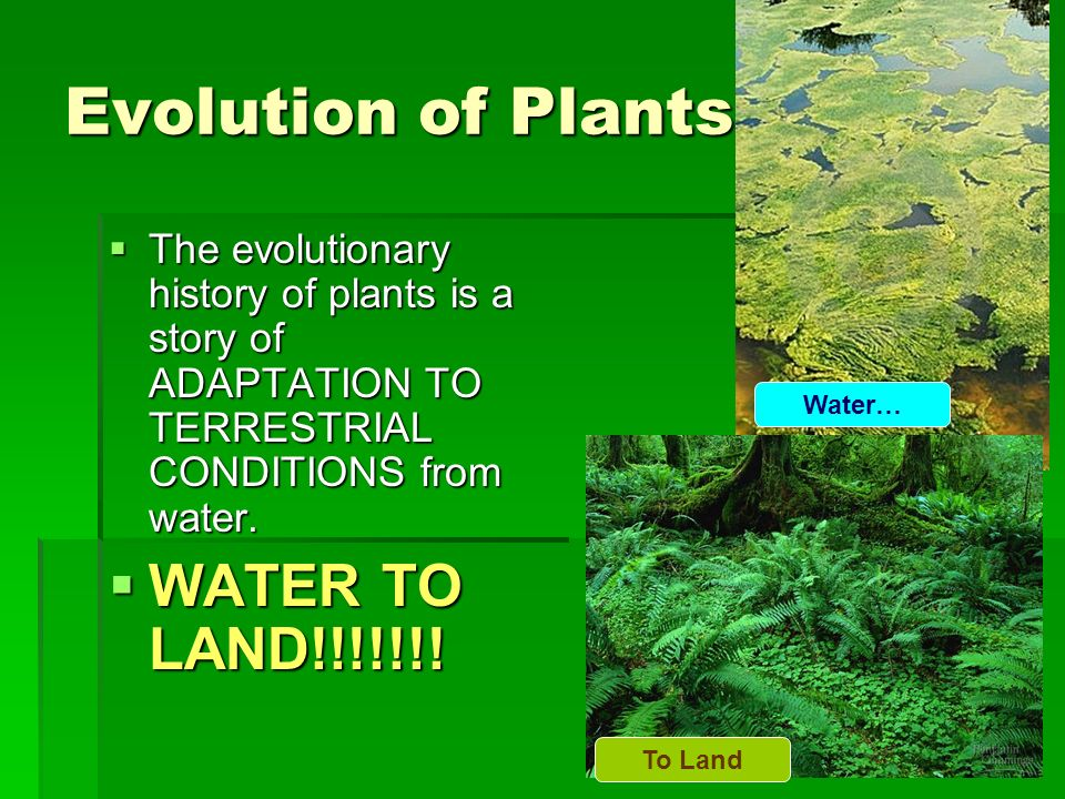 Evolution of Plants WATER TO LAND!!!!!!!