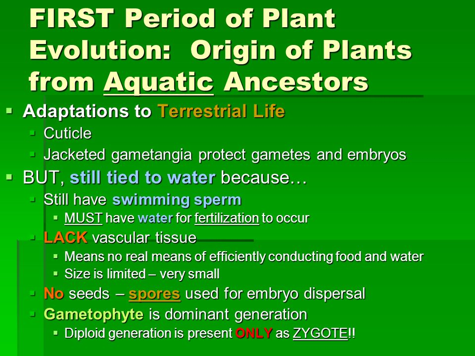 FIRST Period of Plant Evolution: Origin of Plants from Aquatic Ancestors