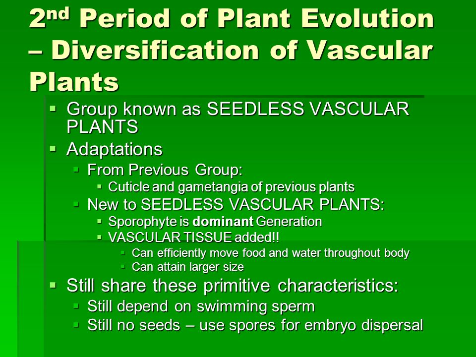 2nd Period of Plant Evolution – Diversification of Vascular Plants