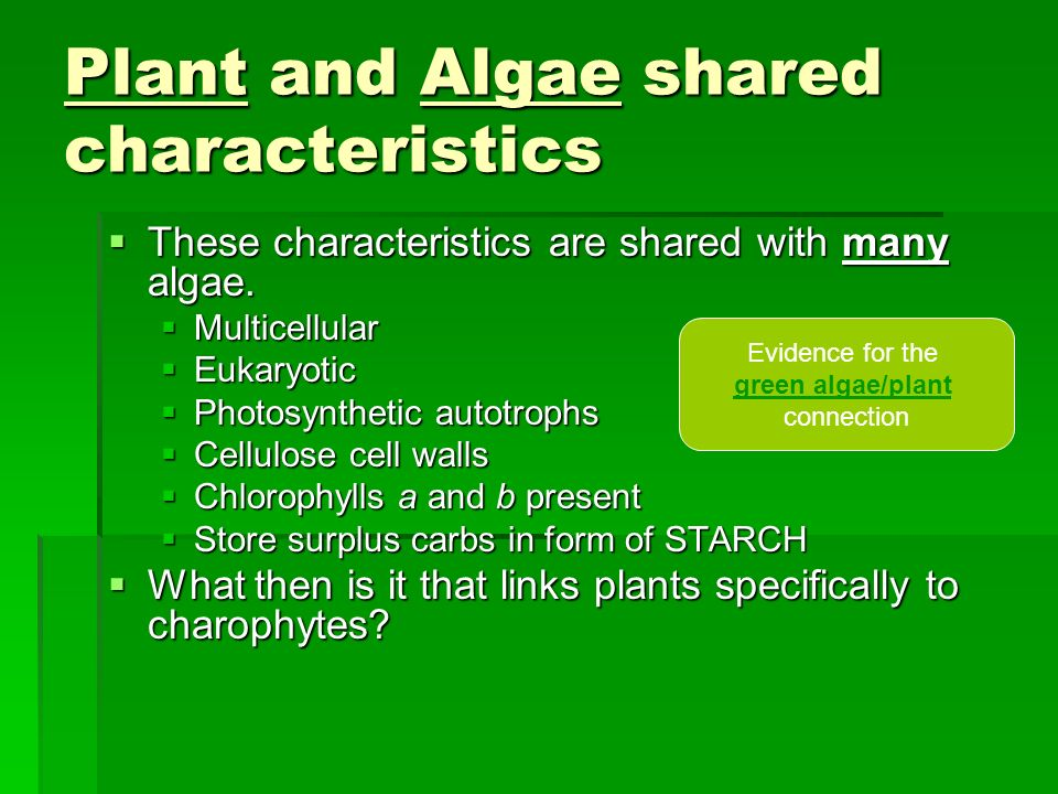 Plant and Algae shared characteristics