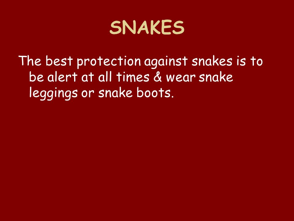 SNAKES The best protection against snakes is to be alert at all times & wear snake leggings or snake boots.