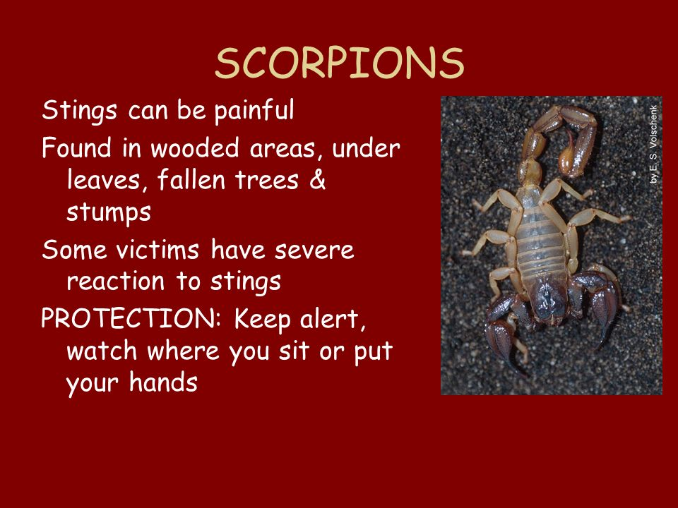 SCORPIONS Stings can be painful