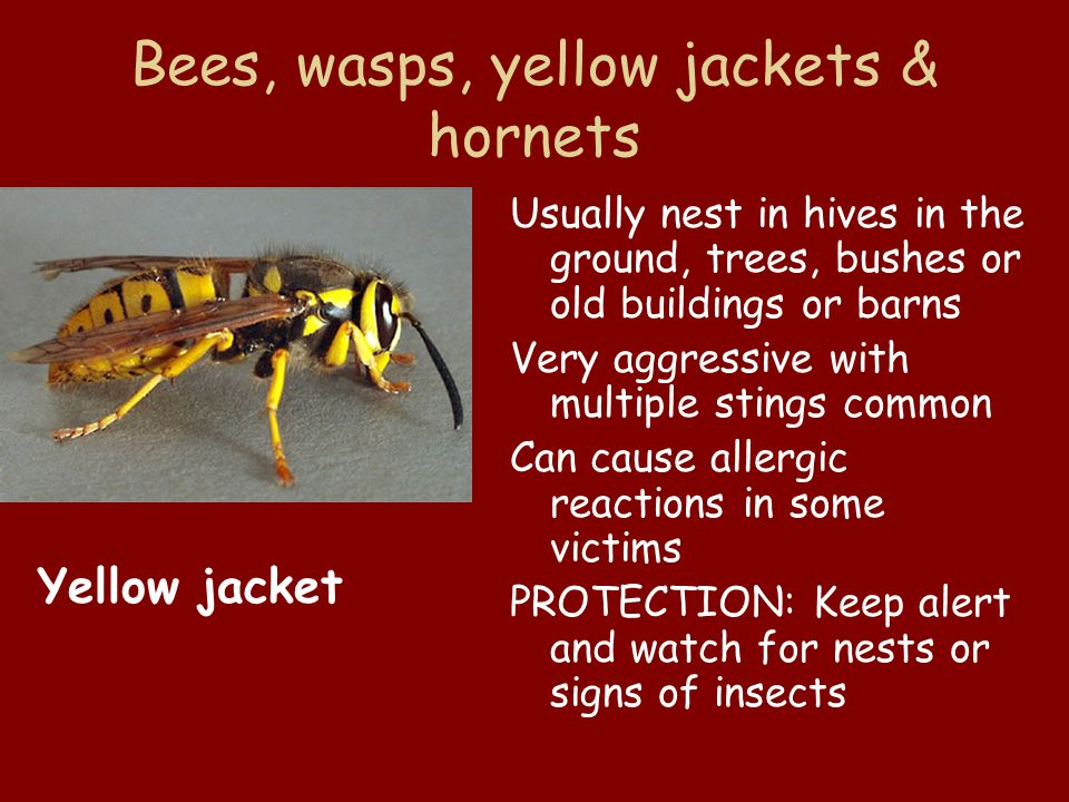Bees, wasps, yellow jackets & hornets