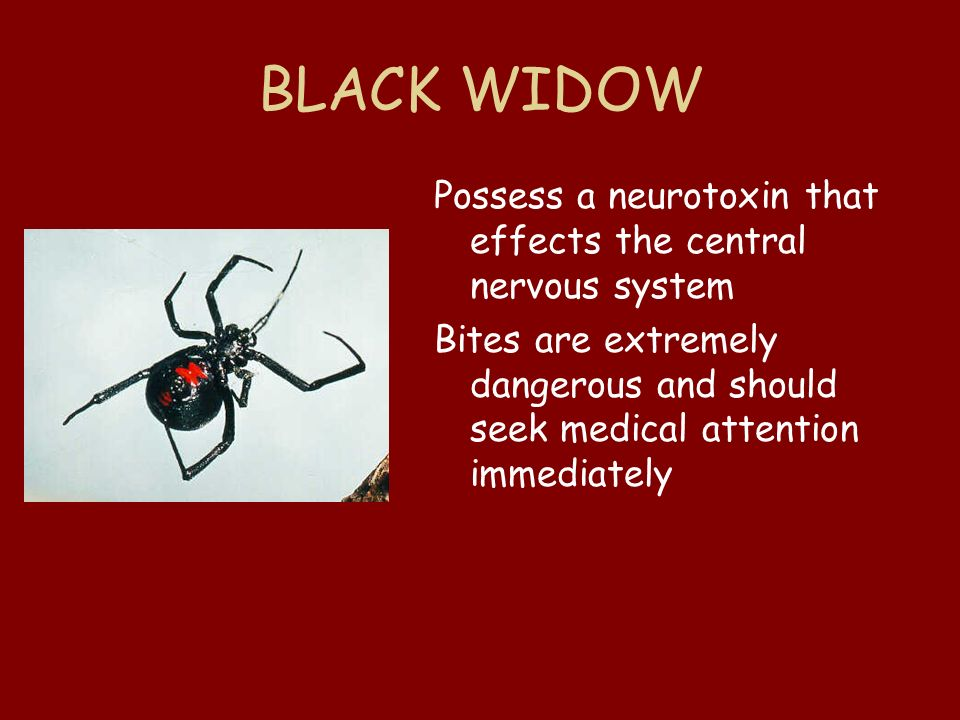 BLACK WIDOW Possess a neurotoxin that effects the central nervous system.