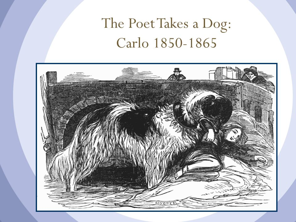 The Poet Takes a Dog: Carlo