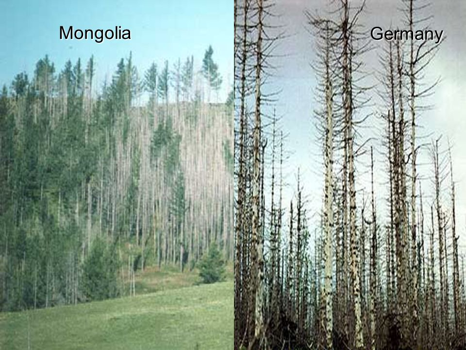Mongolia Germany Forest damage is exemplified by the devastation in the Black forest in Germany.