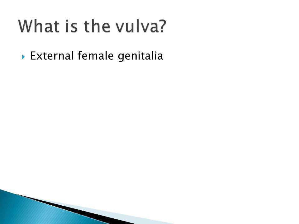 What is the vulva External female genitalia