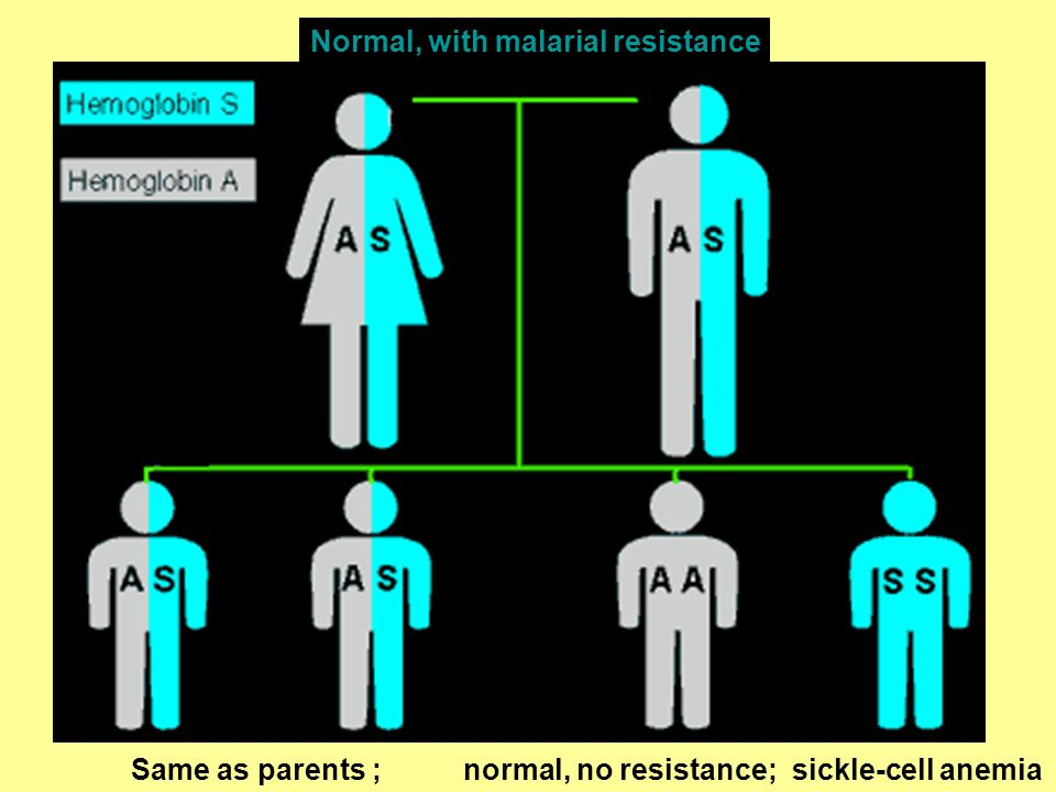 Normal, with malarial resistance
