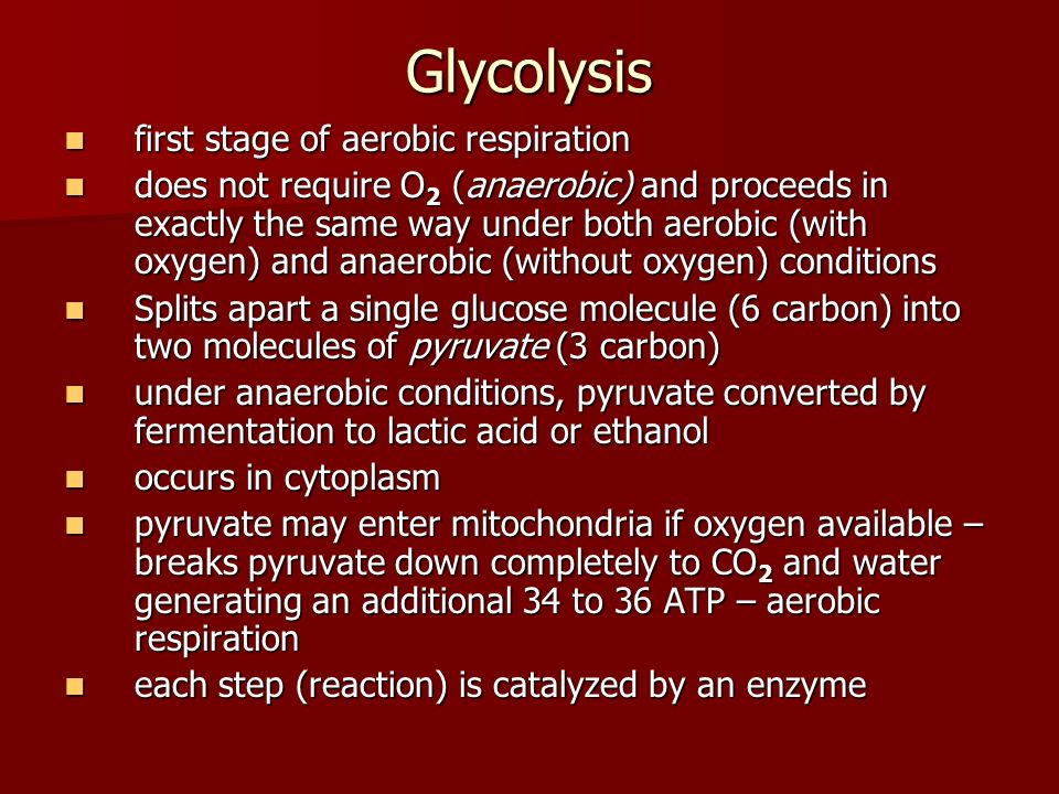 Glycolysis first stage of aerobic respiration