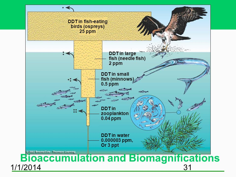 Bioaccumulation and Biomagnifications