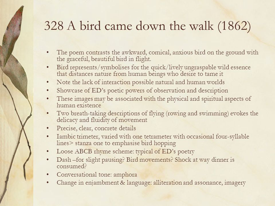 328 A bird came down the walk (1862)