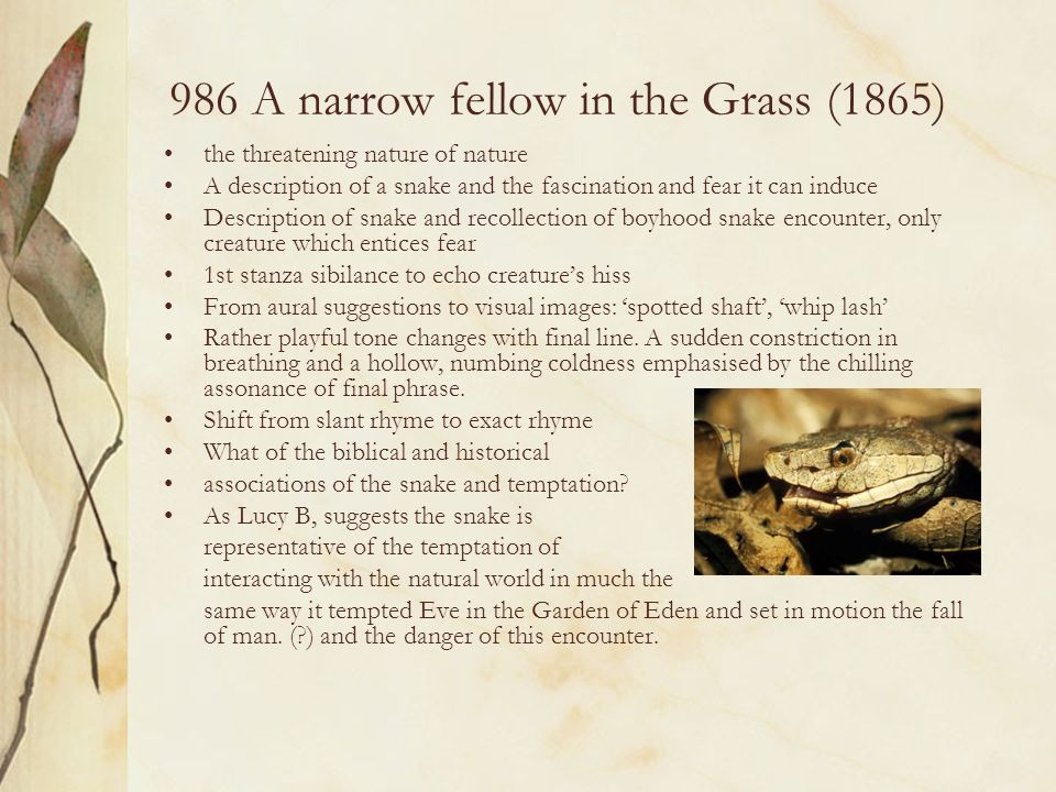 986 A narrow fellow in the Grass (1865)