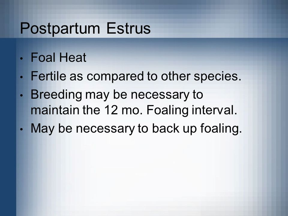 Postpartum Estrus Foal Heat Fertile as compared to other species.