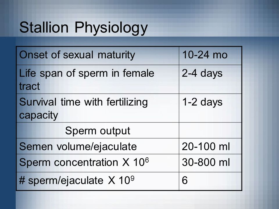 Stallion Physiology Onset of sexual maturity 10-24 mo
