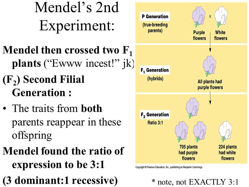 Mendel's 2nd Experiment: