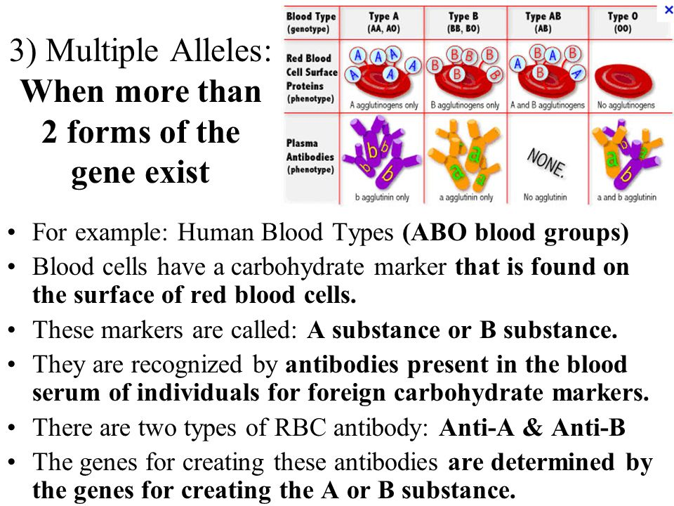 3) Multiple Alleles: When more than 2 forms of the gene exist