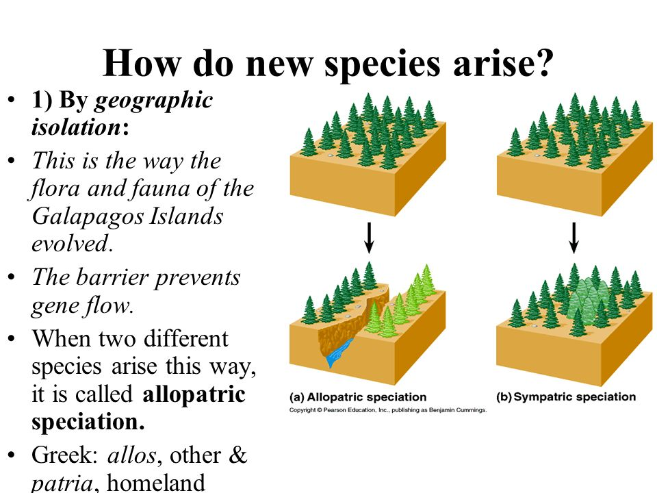 How do new species arise