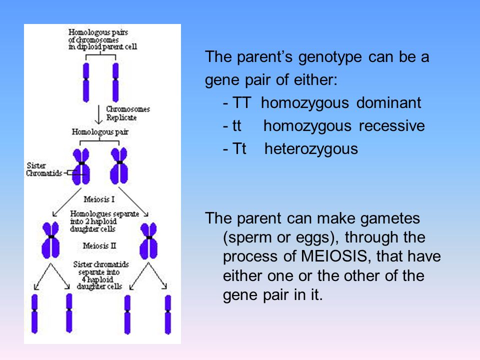 The parent's genotype can be a