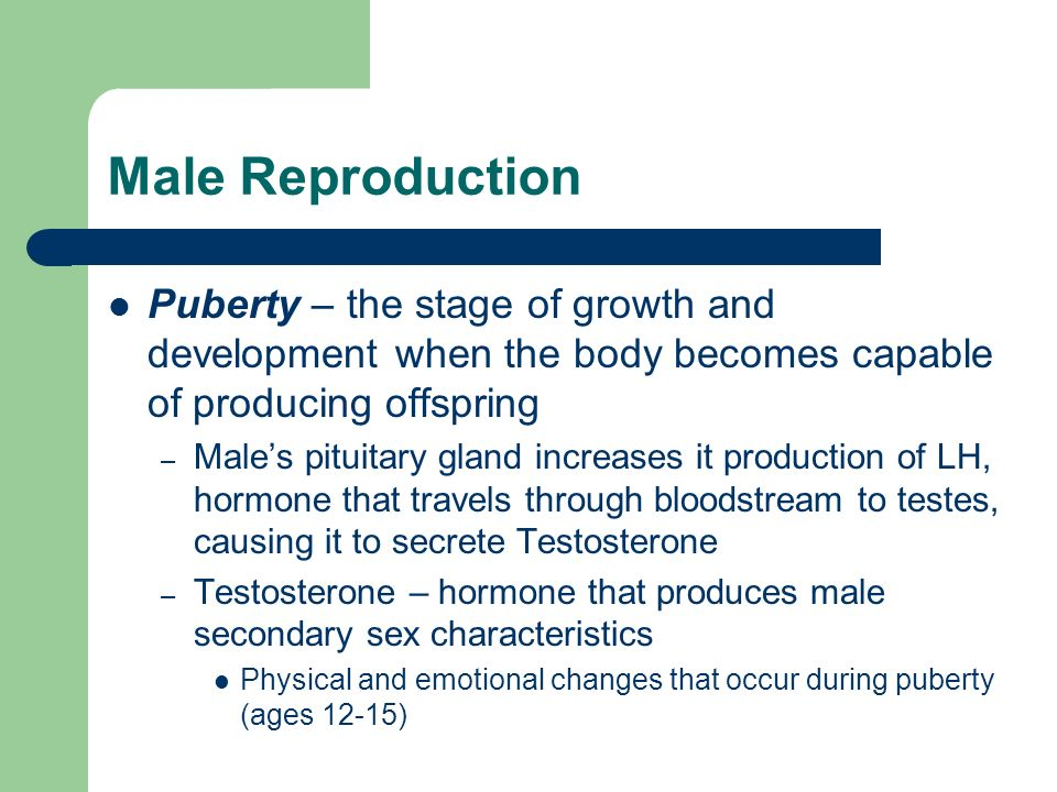 Male Reproduction Puberty – the stage of growth and development when the body becomes capable of producing offspring.