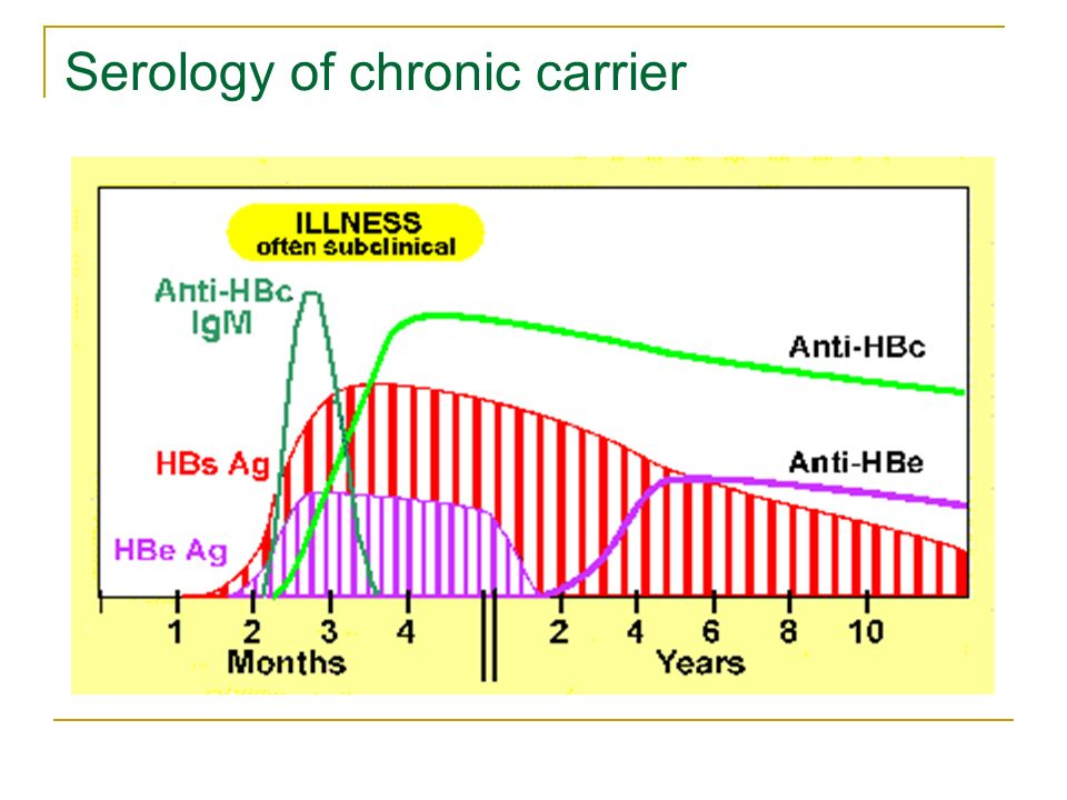 Serology of chronic carrier