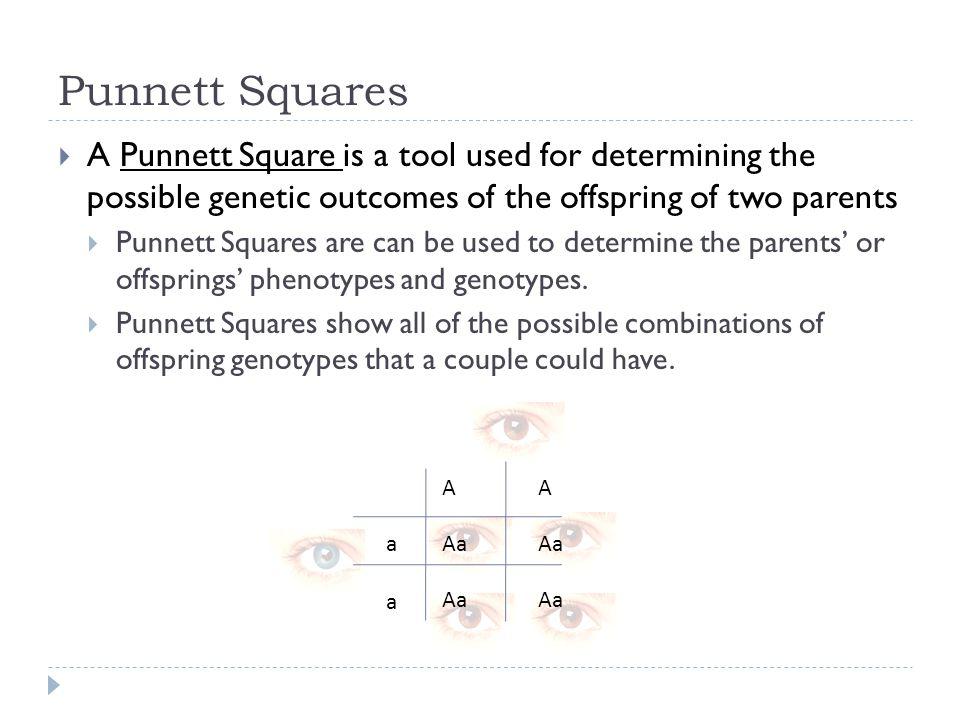 Punnett Squares C Kohn Waterford WI