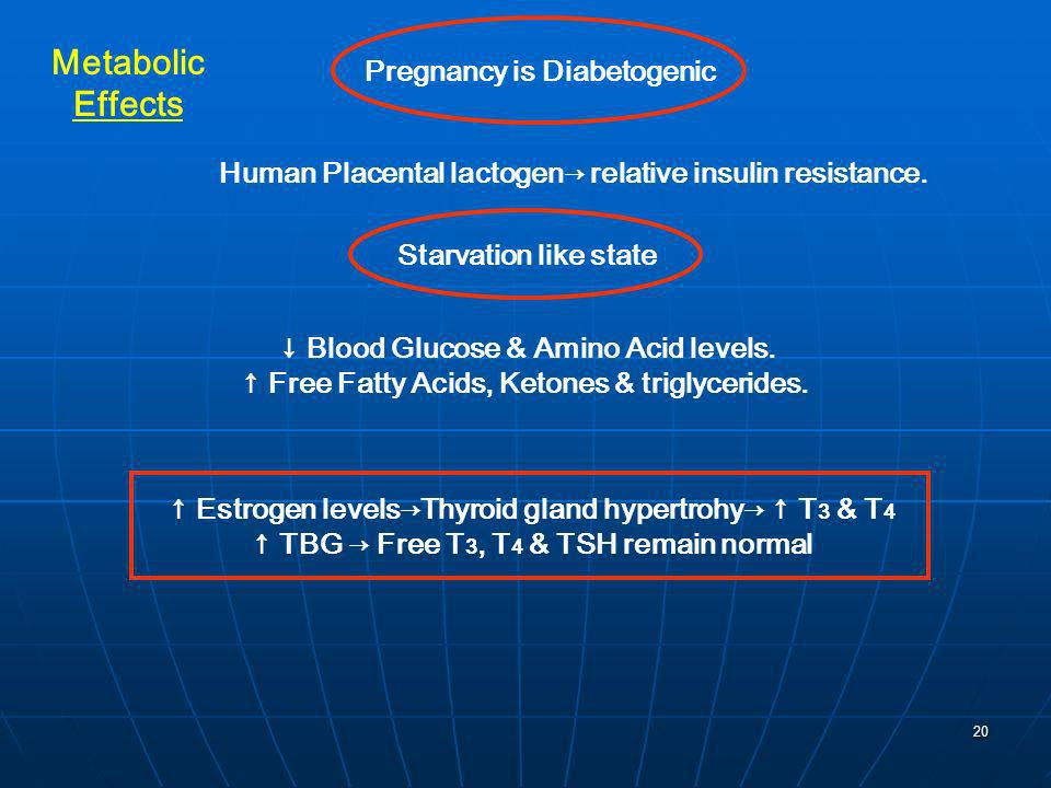 Metabolic Effects Pregnancy is Diabetogenic